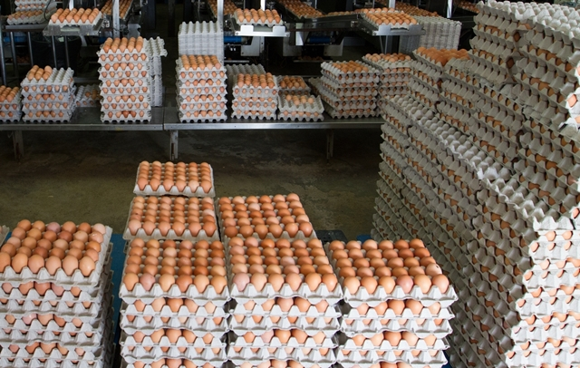 NBD -  A fraction of the eggs that will be cracked for National Breakfast Day on 18 March 2013